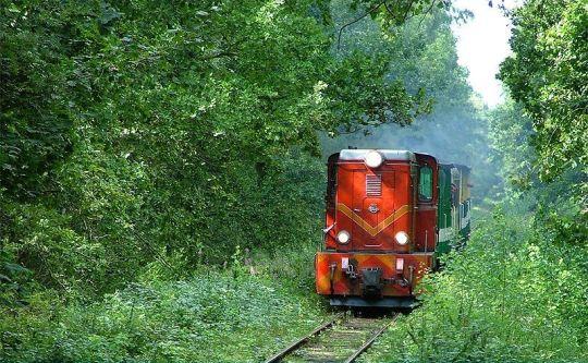 Turystyczny pociąg przedziera się przez zarośla