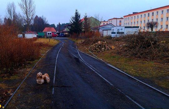 Głowica południowa stacji - na lewo tor w stronę Kurozwęcza, na prawo bocznica kotłowni